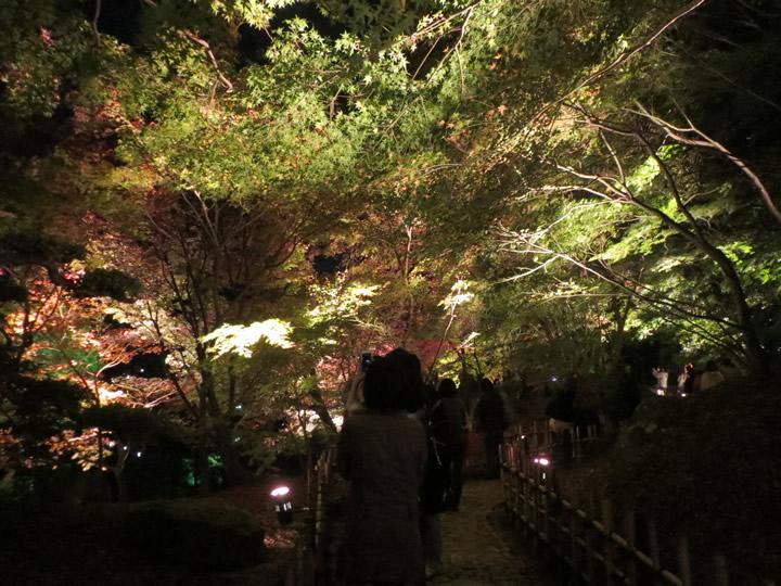 栗林公園ライトアップ2015